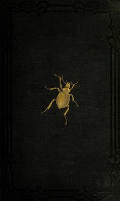 Cover beetle. An introduction to entomology. v. 2. 1843.