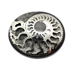 Pyrite Ammonite, ID mm Ammonite, Personalized Items, Ebay