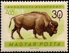 American Bison (Bison bison) American Bison, Postage Stamps, 30, Moose Art, Mid Century, Gallery, Cows, Buffalo, Stamps