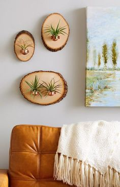 This Trendy Wood Air Plant Hanger Give your air plant a home in an environment of beauty when you mount it against a backdrop of natural wood.Give your air plant a home in an environment of beauty when you mount it against a backdrop of natural wood. Hanging Air Plants, Diy Hanging, Plants Indoor, Indoor Outdoor, Outdoor Decor, House Plants Decor, Plant Decor, Air Plant Display, Plant Holders