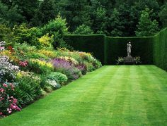 creating a fence with plants Trees And Shrubs, Trees To Plant, Amazing Gardens, Beautiful Gardens, House Plants Hanging, Short Trees, Herbaceous Border, Lush Lawn, Professional Landscaping