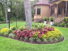 "Inexpensive Landscaping Ideas | Red Flash"" caladiums and Melampodium"