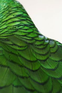 Green feathers of parrot - 42-21251438 - Royalty-Free - Stock Photo -  Green feathers