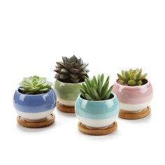 *Werbung* Sukkulenten & Kakteen Töpfe, Miniblumentöpfe mit Bambusuntersetzer 4er Set Grün, Blau, Rosa, Türkis