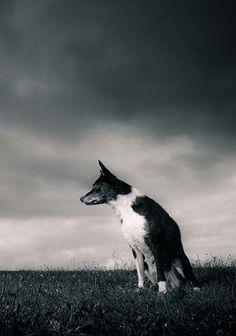 I cani sono i migliori amici dell'uomo, ma talvolta la serena convivenza con i nostri amici a quattro zampe è messa in discussione dai comportamenti poco rispettosi dei loro proprietari. Succede che a Montemurlo, dopo numerose segnalazioni da parte di cittadini