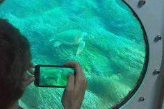 ★ Hoping to see turtles during your stay? ★ #paphos #atlantisturtlecruise #larabeach #pissouriturtlewatch #pissouri #loggerhead https://plus.google.com/+PissouribayCyp/posts/7pr84qCB3Kp