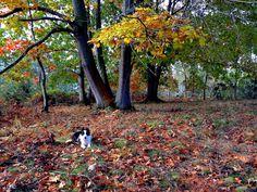 Vega y el otoño en Asturias