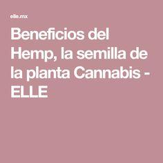 Beneficios del Hemp, la semilla de la planta Cannabis - ELLE