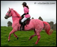 A Pink horse in Northern Ireland for the Giro d'Italia