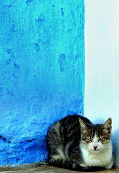 A Cat in Rabat, Kasbah, Morocco.