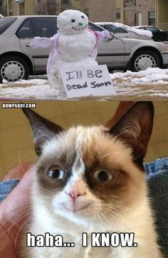 grumpy-cat-christmas-snow-man-melting-what-makes-grumpy-cat-happy, funny christmas pictures - Dump A Day Grumpy Cats, Grumpy Cat Quotes, Funny Grumpy Cat Memes, Cat Jokes, Funny Cats, Funny Memes, Memes Humor, Humor Quotes, Funny Minion