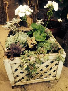 For our front door. I love succulents!