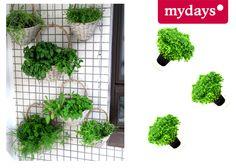 Kräutergarten - DIY für Balkon & Wohnung   mydays Magazin