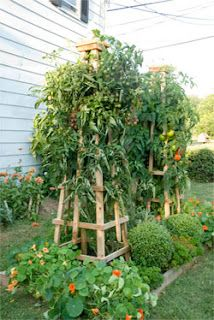 Tomato Tower - How to build