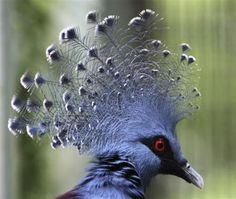 blue crowned exotic bird