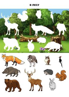 Educational Activities, Preschool Activities, Cartoon Sun, Cicely Mary Barker, Montessori Materials, Busy Book, Home Schooling, Woodland Animals, Trees To Plant