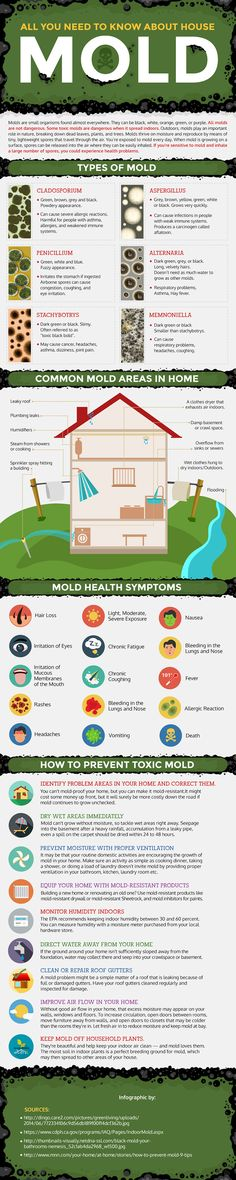 A plumbers guide on how to prevent mold in your house. Do on audit, clean and replace any old pipes, improve air flow in your home and more!