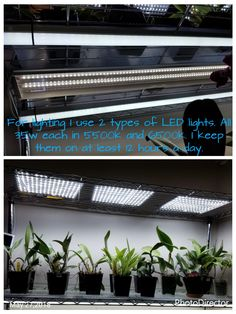 Lighting. Different orchids have different light requirements from high light to low light. Check the lighting requirements for your particular type of orchid you're growing. If growing different types that have very different lighting requirements place them on different shelves with the correct lighting.