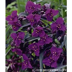 summer shade mature personals Learn about shade perennials, including perennials for shade beneath mature trees,  offering sunlight in spring followed by summer shade.
