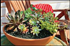 Planting Succulents
