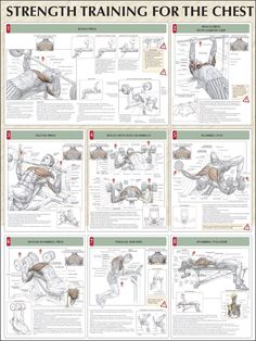 Strength Training For The Chest Chart
