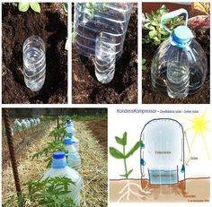 Solar Irrigation - cut top of water bottle off, fill with water, and place in hole next to plant; then cut the bottom off of a juice bottle and place over water bottle. Condensation drips onto soil and waters the plant.