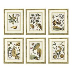 Recreating the look of an antique botanical study, this series is brought to life in sophisticated shades of ivory, gold and olive green - a neutral palette for any space. Hang in a grid to create a high-impact gallery wall.