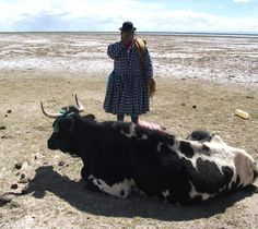 Lunch-workshop March 'Beyond Gold' - (about mining in Latin America) Otherwise Wageningen 13 March, Latin America, Cow, Workshop, Lunch, Animals, Atelier, Animaux, Eat Lunch