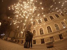 cluj lights bulbs love happines tree
