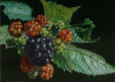 "Colored Pencil Drawing   ""Blackberries in the Sun"" by frances tanner"