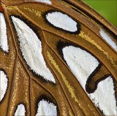 Close-up of Butterfly wing Moth Wings, Insect Wings, Insect Art, Beautiful Bugs, Beautiful Butterflies, Butterfly Painting, Butterfly Wings, Patterns In Nature, Textures Patterns