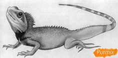 ящерица рисунок карандашом - Поиск в Google