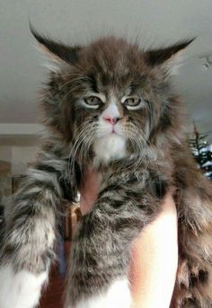 catsquatch! I LOVE IT!