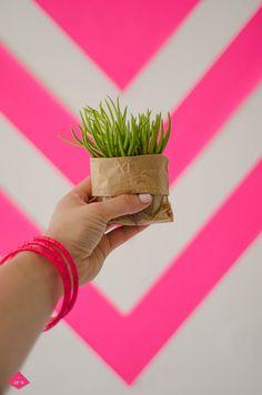 Succulent plant Planting Succulents, Event Design, Herbs, Neon, Plants, Pink, Color, Colour, Herb