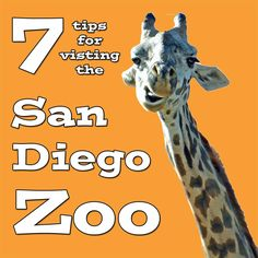 7 Tips for visiting the San Diego Zoo | tipsforfamilytrips.com