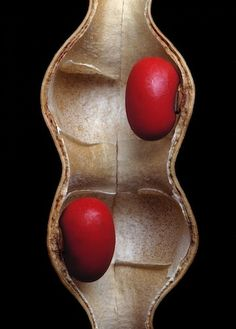 Red seeds in a pod