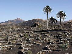 Spain Canary Islands Las Palmas    Spain - Lanzarote - La Geria (1)