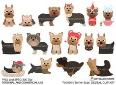 Yorkshire terrier perros arte digital clip para uso Personal y image 0 Wire Fox Terrier Puppies, Border Terrier Puppy, Westie Puppies, Cocker Spaniel Puppies, Yorkie Puppy, Terrier Dogs, Yorkies, Fluffy Corgi, Yorkshire Terrier Dog
