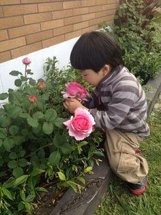Beautiful Austin Roses(*´∀`)