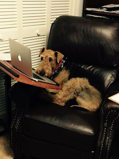 Here are some dogs at work with their hard working humans.