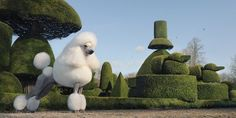 The standard poodle is definitely anything but ordinary! The aristocrat of dog world. Especially with the continental clip. Photography by Tim Flach