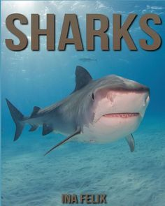 Sharks: Children Book of Fun Facts & Amazing Photos on Animals in Nature - A Wonderful Sharks Book for Kids aged 3-7: Amazon.co.uk: Ina Felix: 9781532780172: Books