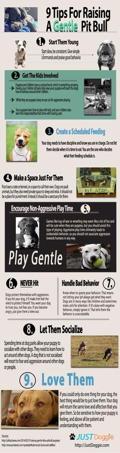 Raising a dog is a huge commitment. However, many people simply do not really understand dog psychology, or why they behave certain ways in certain situations. Pit bulls especially are different in their needs and the way they interact. Although every dog has a unique personality, there are some proven and time-tested ways to …