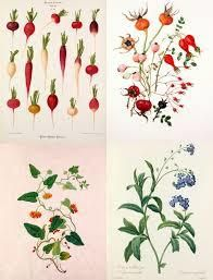 「botanical」の検索結果 - Yahoo!検索(画像)
