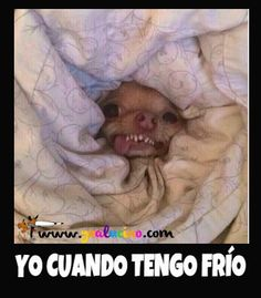 Funny Cute, Hilarious, Dog Jokes, Spanish Jokes, Mexican Memes, My Animal, Funny Animals, Animals Tumblr, Laughter