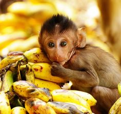 """""""""""""""""""""Banana Baby"""""""""""""""""""" by Jon in Thailand on Flickr. :)"
