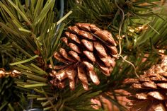 How to Dry Pine Cones Gedroogde denneappels