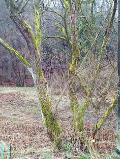 Mystisches Wald im Bergischen Land - März 2013.