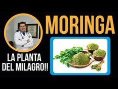 Green Beans, Vegetables, Youtube, Food, Videos, Brunettes, Medicinal Plants, Juices, Norte