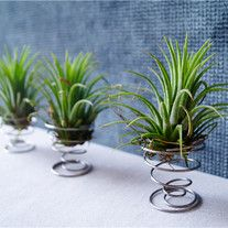 This++Stand+do+not+include+Airplant.+ ++++++++ Materials:+Stainless Pls+be+a+patient,+because+all+of+items+are+made+by+hands+,+It+needs+time+to+make. Natural Life, Standing, Stainless, Air Plants, Holder